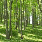 Красива природа и чист въздух в Стара планина   Природен парк Българка
